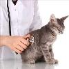 Ветеринарные клиники в Лысково